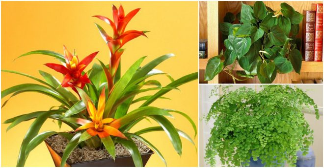 best-plants-that-grow-indoor-without-direct-sunlight-1