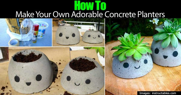 how-to-make-adorable-concrete-planters