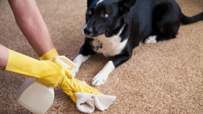 get-rid-of-dog-urine-smell