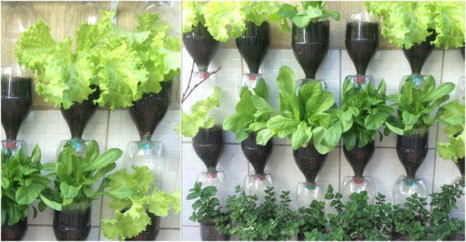 How to make plastic bottle vertical gardens how to instructions - Plastic bottle vertical garden ideas ...